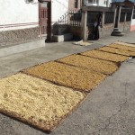 Drying grains for seed and storage