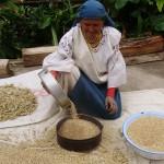 Sifting grains